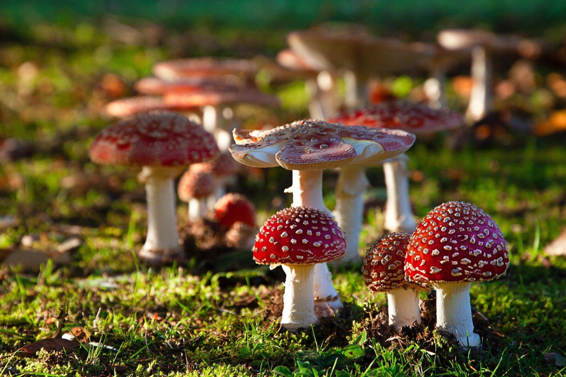 mushroom-5340543_1920
