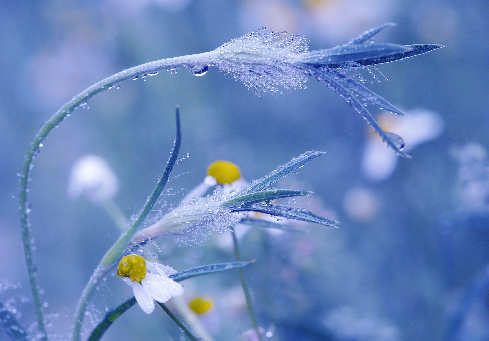 meadow-5407968_1920