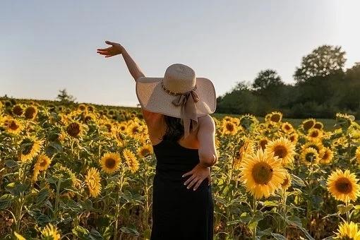 sunflowers-5482116__340