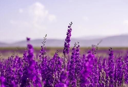 flowers-5383054__340