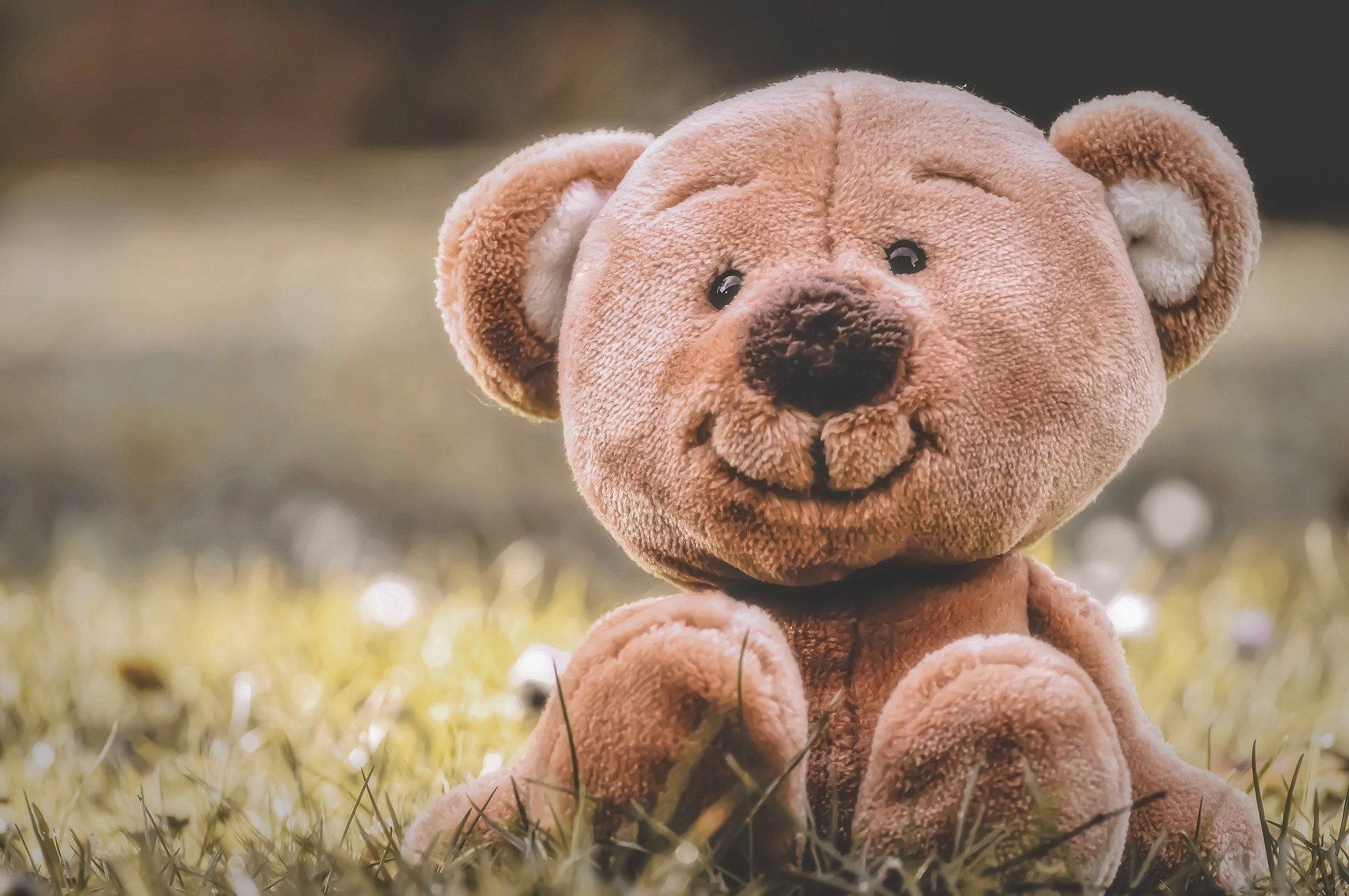 teddy-5314912_1920